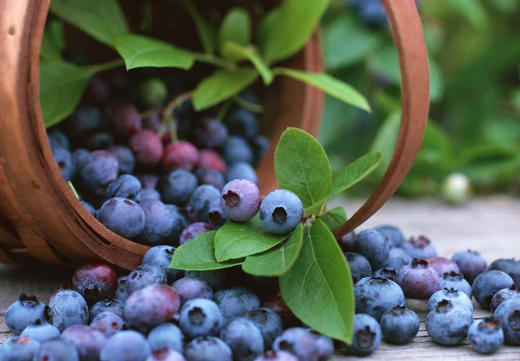 Lợi ích tuyệt vời từ 6 thực phẩm màu tím bạn không nên bỏ qua