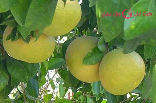 Cách giảm cân hằng ngày đơn giản với hoa quả  tươi-phần 1