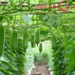 Giảm béo đơn giản, an toàn từ cây nhà lá vườn