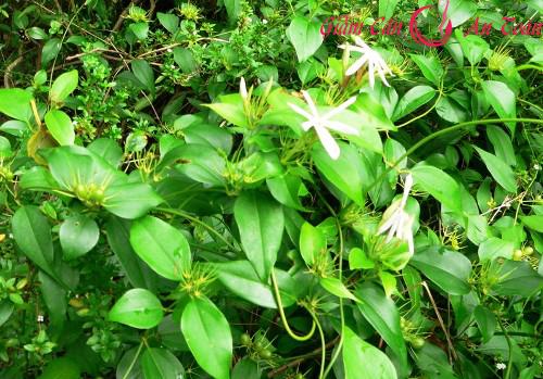 Giảm béo đơn giản, an toàn từ cây nhà lá vườn-phần 2