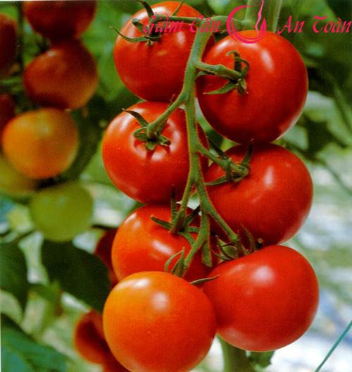 Salad đậu trắng- cà chua giúp giảm mỡ bụng-phần 3