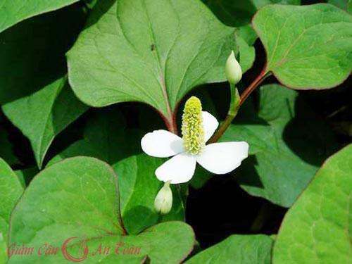 Trị mụn mùa hè hiệu quả với những loại lá quen thuộc
