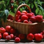 Ăn táo như thế nào để giảm cân hiệu quả nhất ?
