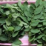 Thực đơn giảm cân trong 3 ngày từ cây nhà lá vườn