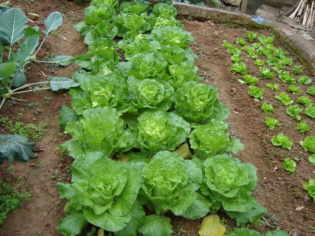 Cách lựa chọn rau xanh an toàn để giảm cân 1