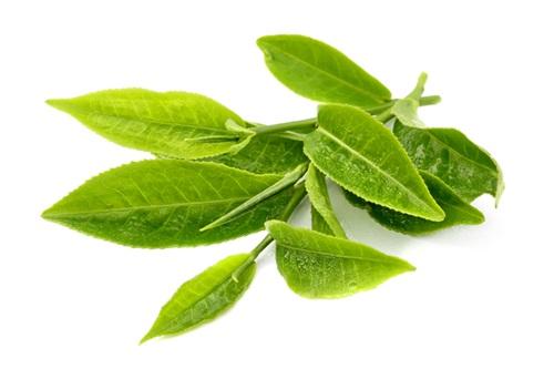 Tìm hiểu cách giảm cân với trà và tác dụng với sức khỏe