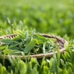 Bạn đã biết cách giảm cân bằng các loại lá cây chưa?