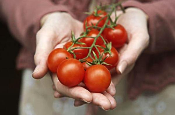 Cà chua giảm cân phong phú.