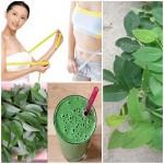 Tư vấn 2 cách chế biến rau ngót giúp người dùng giảm cân hữu hiệu